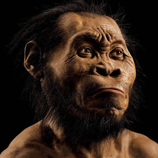 homonaledi_national_geo